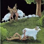 Perché non è una buona idea fare sesso con una pecora